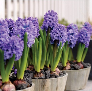 Flowers to plant in spring image collections flower decoration ideas spring flowers to plant images flower decoration ideas spring flowers to plant image collections flower decoration mightylinksfo